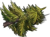 Fir-tree-trunk.png